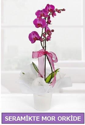 Seramik içerisinde birinci kalite tek dallı mor orkide  Adana çiçekçi İnternetten çiçek siparişi