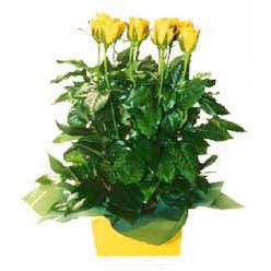 11 adet sari gül aranjmani  Adana online çiçekçi , çiçek siparişi