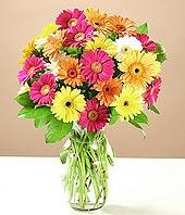 Adana çiçek online çiçek siparişi  17 adet karisik gerbera
