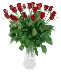 Adanadaki çiçekçiler çiçekçi telefonları  11 adet kimizi gülün ihtisami cam yada mika vazo modeli