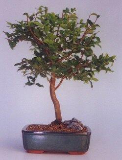 Adanaya çiçek ucuz çiçek gönder  ithal bonsai saksi çiçegi  Adana anneler günü çiçek yolla