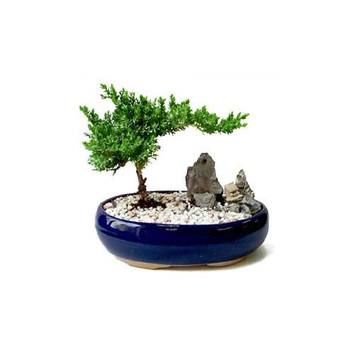 ithal bonsai saksi çiçegi  Adana çiçek siparişi çiçek gönderme