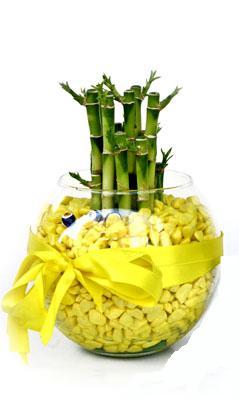 cam fanus içerisinde bambo  Adana internetten çiçek satışı