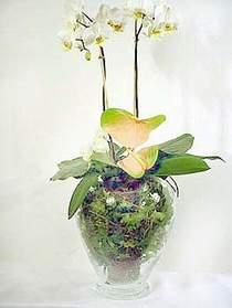 Adana ucuz çiçekçi çiçek satışı  Cam yada mika vazoda özel orkideler