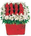 Adana çiçek siparişi çiçek gönderme  Kare cam yada mika içinde kirmizi güller - anneler günü seçimi özel çiçek