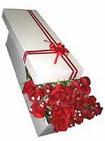 Adanadaki çiçekçiler çiçekçi telefonları  11 adet 1.kalite magnum güller