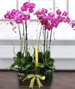 4 dallı mor orkide  Adana güvenli kaliteli hızlı çiçek