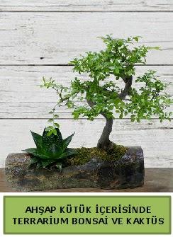 Ahşap kütük bonsai kaktüs teraryum  Adana internetten çiçek siparişi