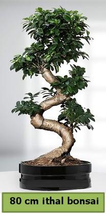 80 cm özel saksıda bonsai bitkisi  Adanadaki çiçekçiler çiçekçi telefonları