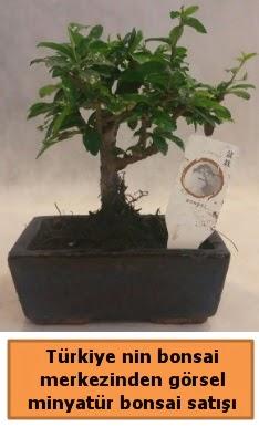 Japon ağacı bonsai satışı ithal görsel  Adana çiçek satışı çiçek yolla