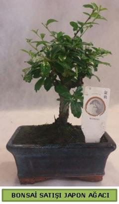 Minyatür bonsai ağacı satışı  Adana çiçek siparişi çiçek gönderme
