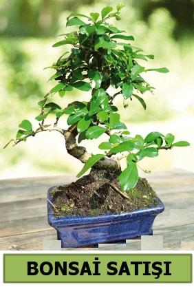 Çam bonsai japon ağacı satışı  Adana ucuz çiçekçi çiçek satışı