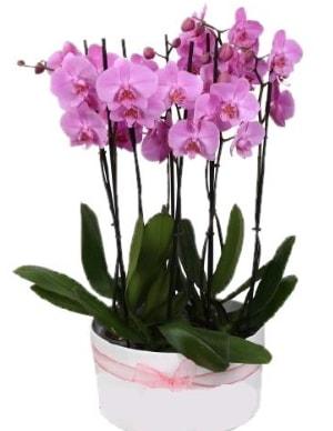 Beyaz seramik içerisinde 7 dallı mor orkide  Adanadaki çiçekçiler çiçekçi telefonları