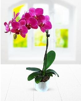 Tek dallı mor orkide  Adana ucuz çiçekçi çiçek satışı